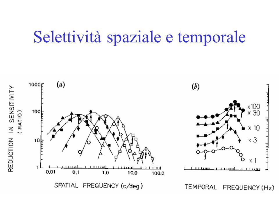Selettività spaziale e temporale