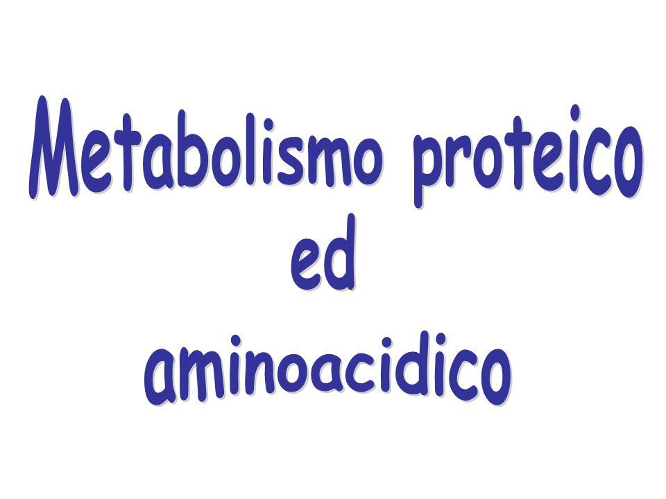 Metabolismo proteico ed aminoacidico