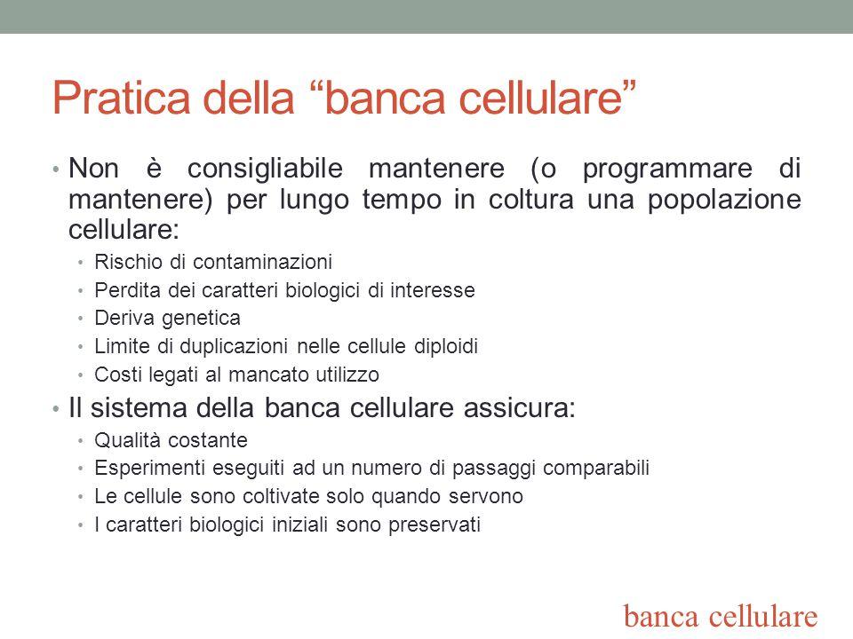 Pratica della banca cellulare