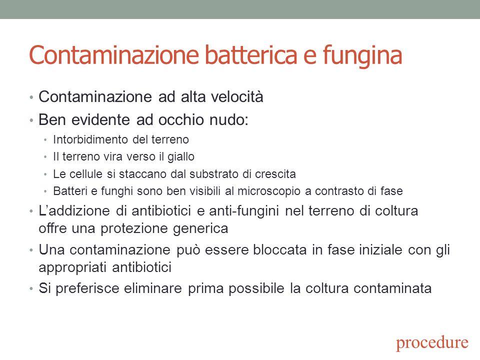 Contaminazione batterica e fungina