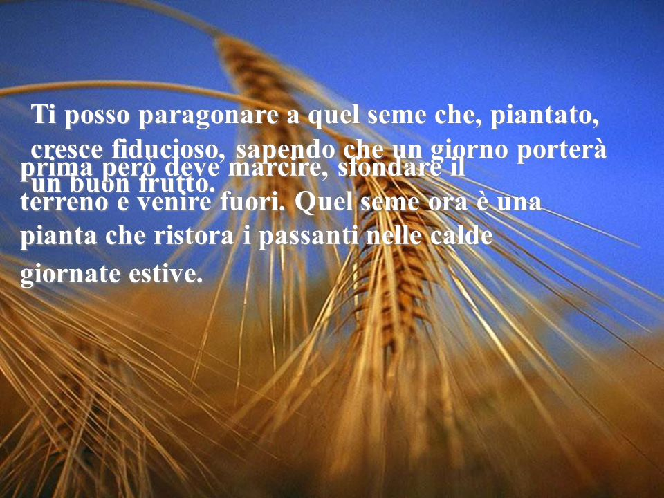 Ti posso paragonare a quel seme che, piantato, cresce fiducioso, sapendo che un giorno porterà un buon frutto.