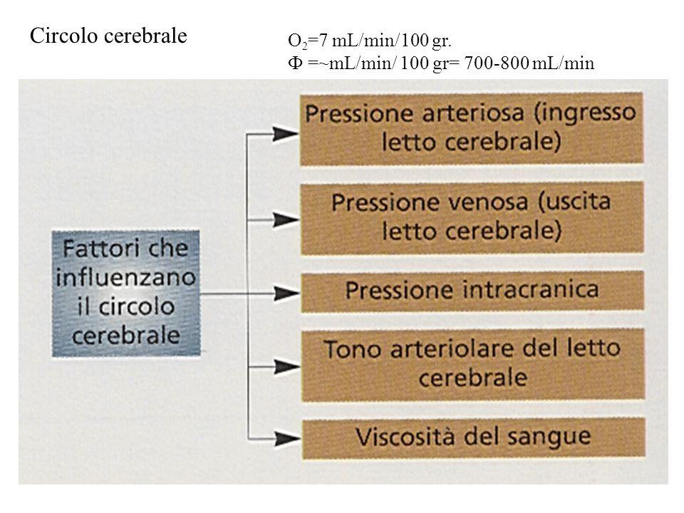 Circolo cerebrale O2=7 mL/min/100 gr.