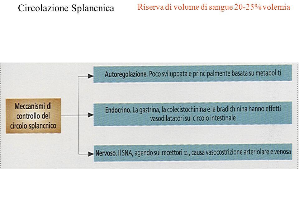 Circolazione Splancnica