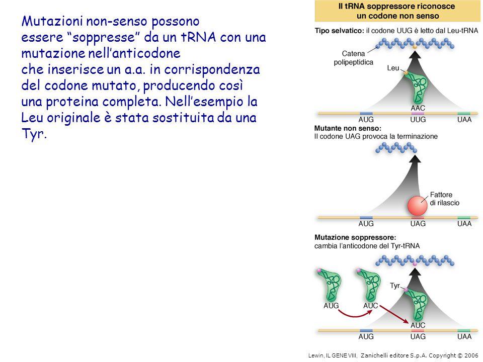 Mutazioni non-senso possono