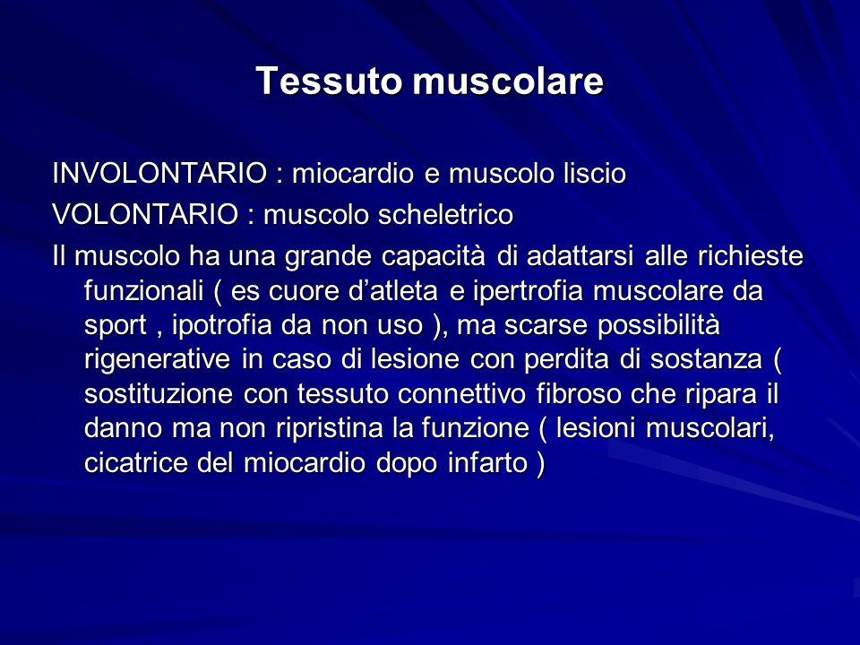 Tessuto muscolare INVOLONTARIO : miocardio e muscolo liscio