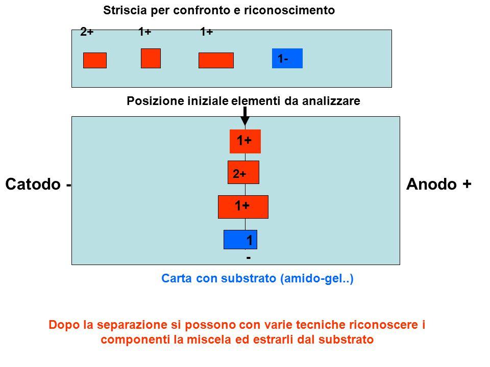 Catodo - Anodo + 1+ 1+ 1- Striscia per confronto e riconoscimento 2+