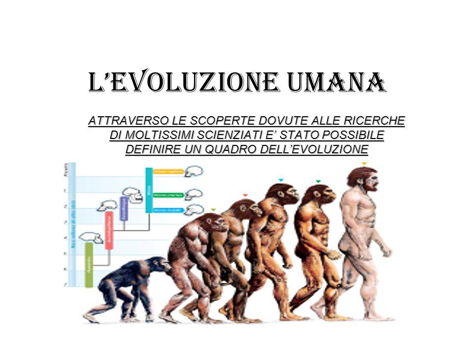 L'EVOLUZIONE UMANA ATTRAVERSO LE SCOPERTE DOVUTE ALLE RICERCHE DI MOLTISSIMI SCIENZIATI E' STATO POSSIBILE DEFINIRE UN QUADRO DELL'EVOLUZIONE.