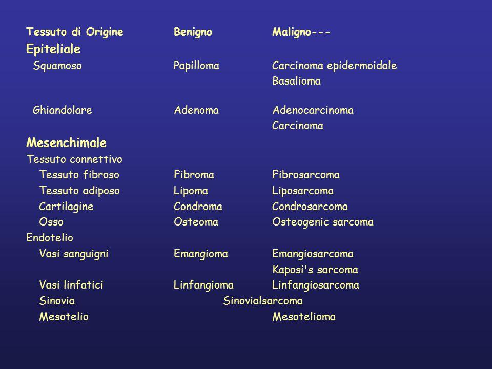 Epiteliale Mesenchimale Tessuto di Origine Benigno Maligno---