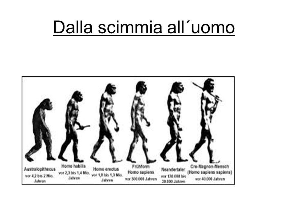 Dalla scimmia all´uomo