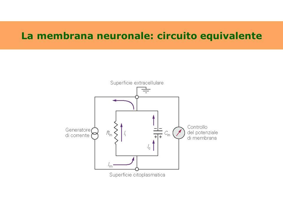 La membrana neuronale: circuito equivalente