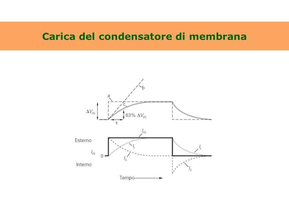 Carica del condensatore di membrana