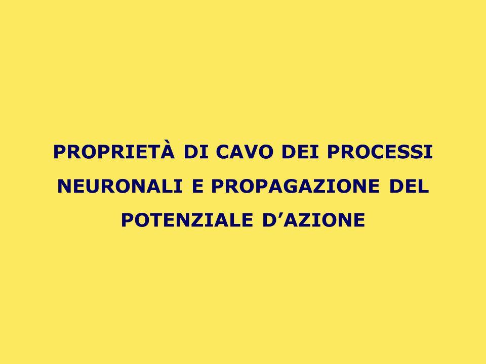 PROPRIETÀ DI CAVO DEI PROCESSI NEURONALI E PROPAGAZIONE DEL POTENZIALE D'AZIONE