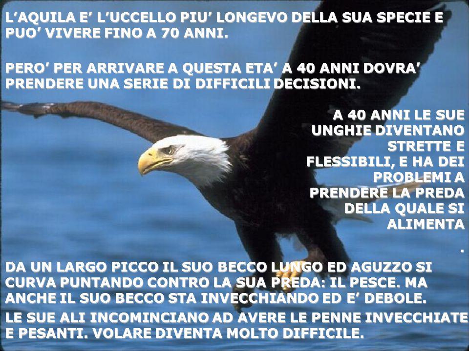 L'AQUILA E' L'UCCELLO PIU' LONGEVO DELLA SUA SPECIE E PUO' VIVERE FINO A 70 ANNI.