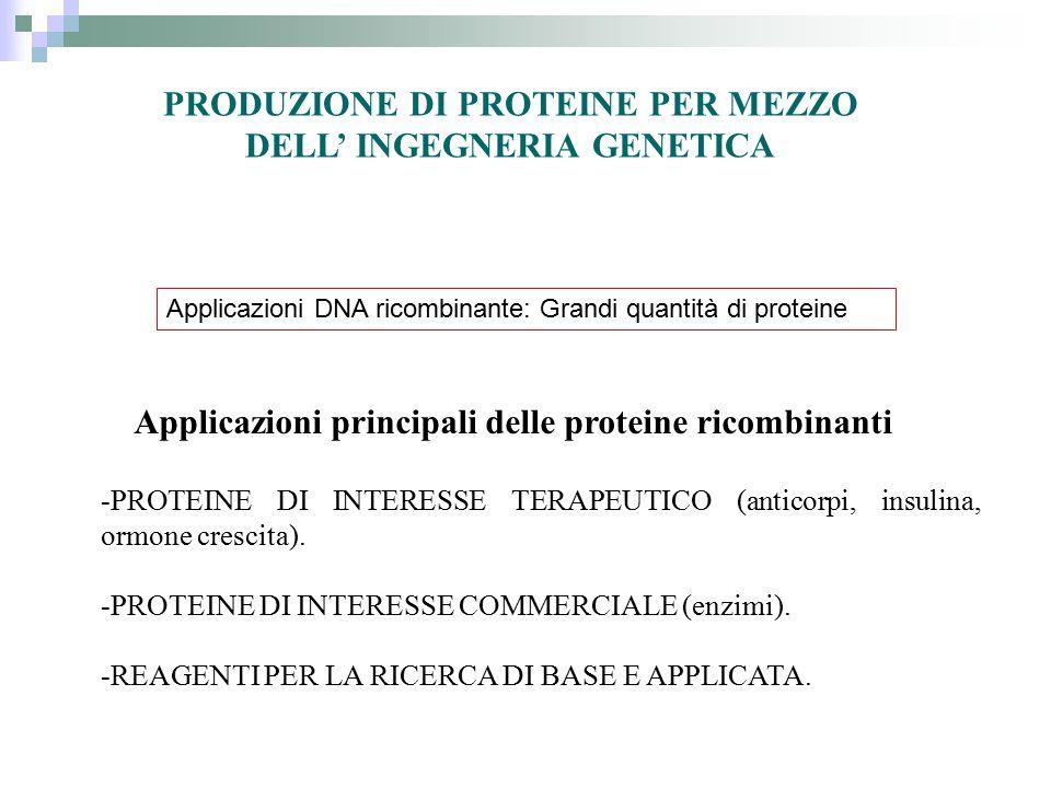 PRODUZIONE DI PROTEINE PER MEZZO DELL' INGEGNERIA GENETICA