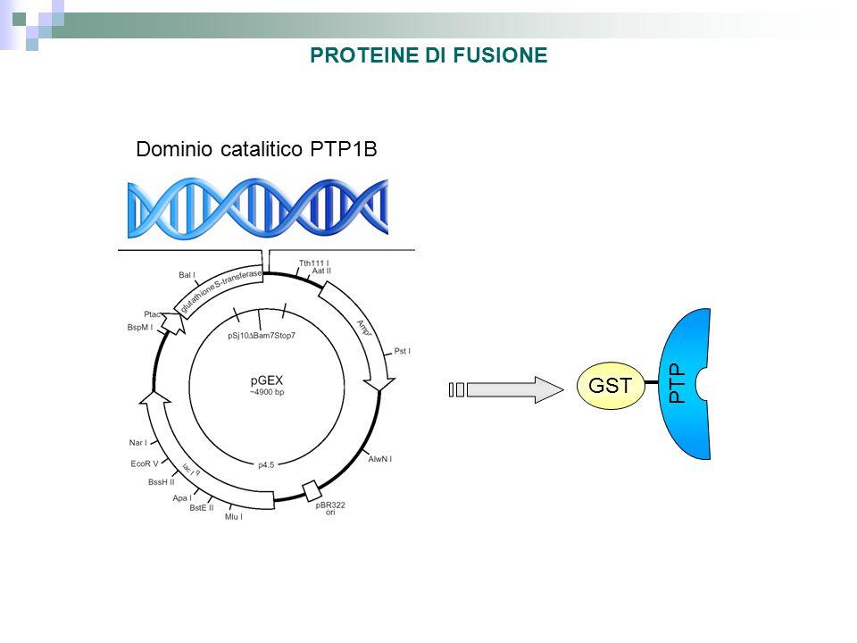Dominio catalitico PTP1B