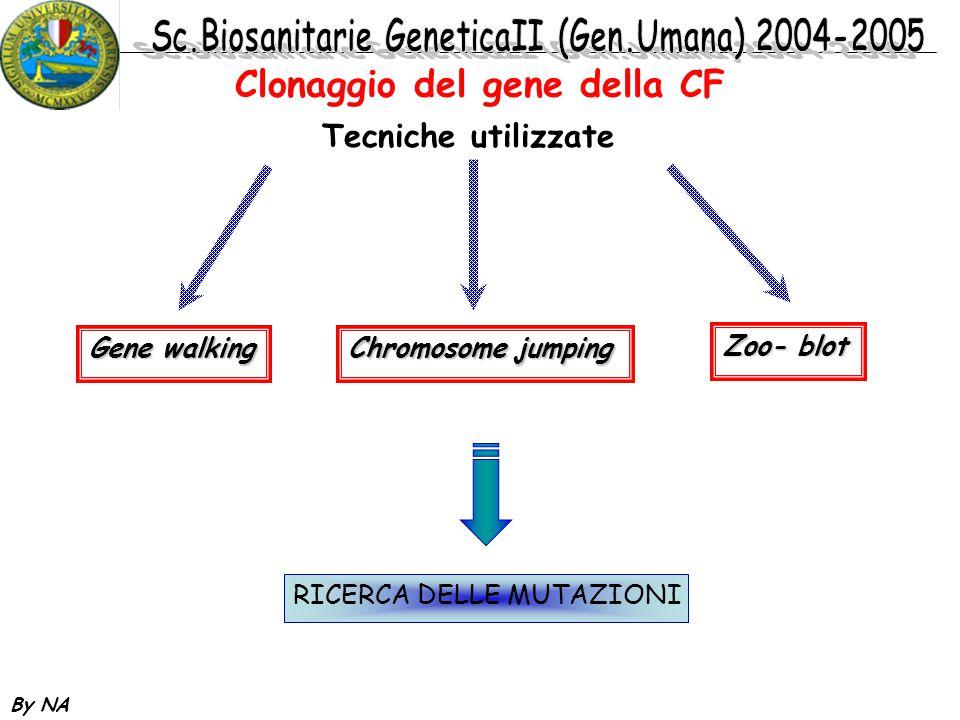 Clonaggio del gene della CF