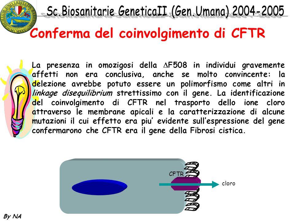 Conferma del coinvolgimento di CFTR