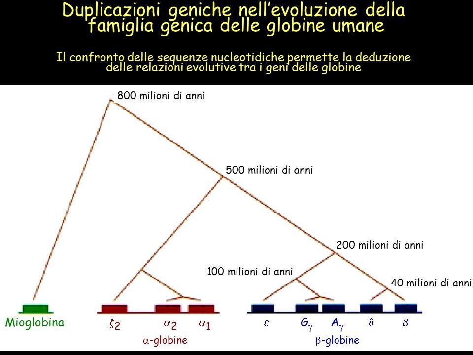 Duplicazioni geniche nell'evoluzione della