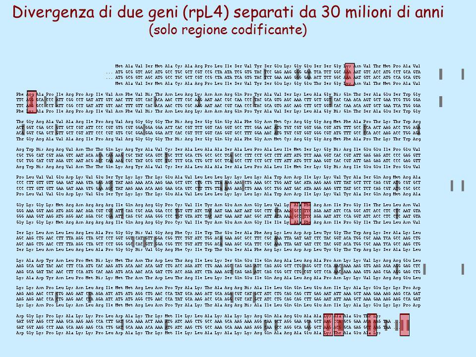 Divergenza di due geni (rpL4) separati da 30 milioni di anni