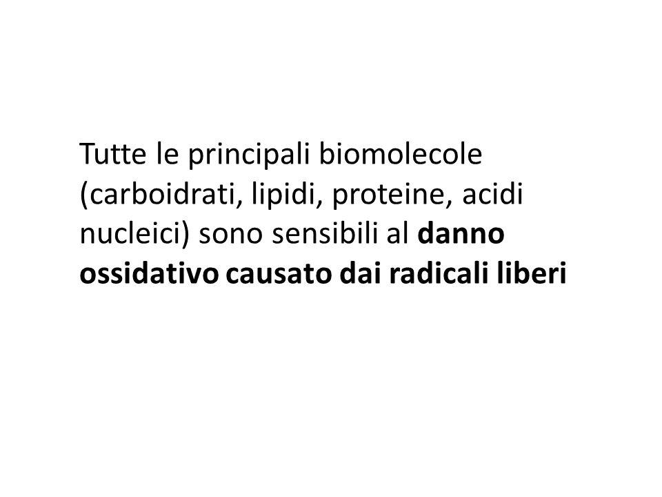 Tutte le principali biomolecole (carboidrati, lipidi, proteine, acidi nucleici) sono sensibili al danno ossidativo causato dai radicali liberi