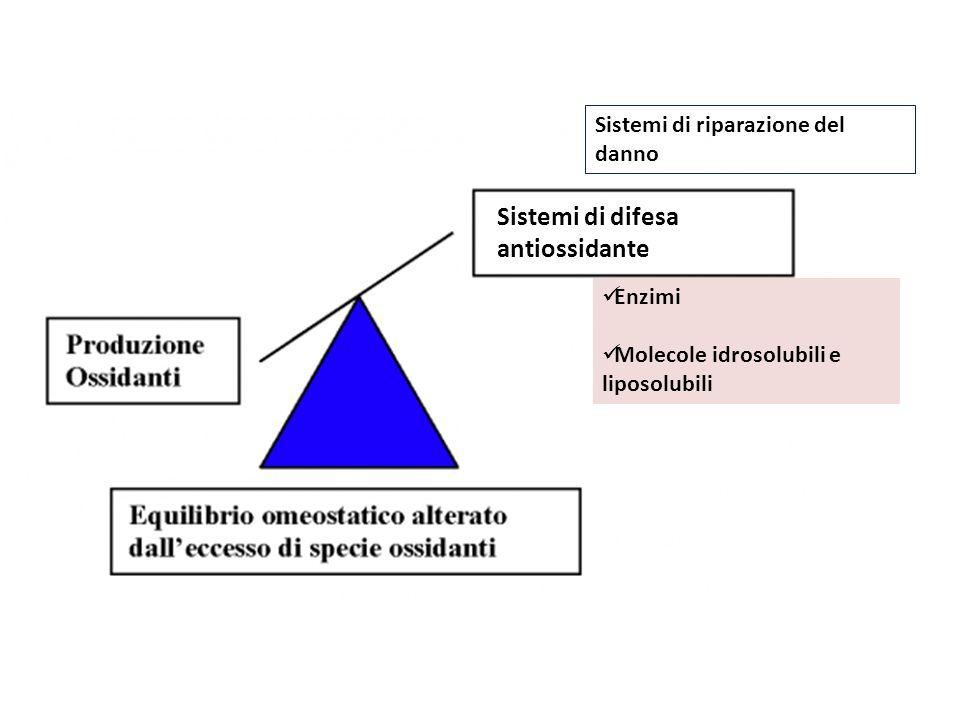 Sistemi di difesa antiossidante