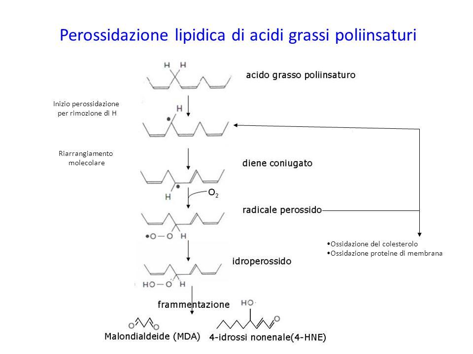 Perossidazione lipidica di acidi grassi poliinsaturi