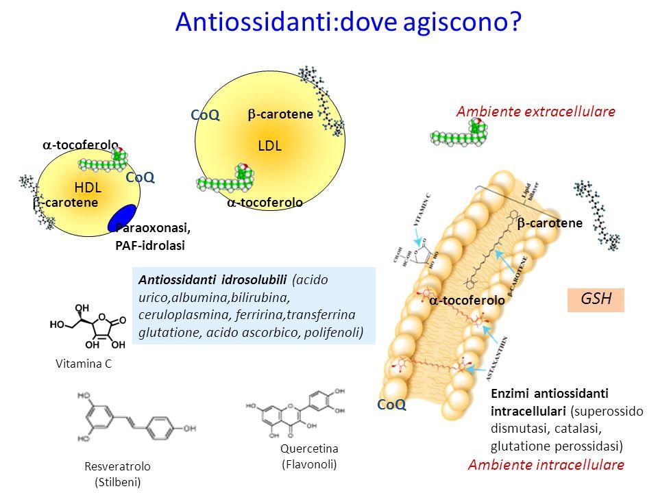 Antiossidanti:dove agiscono