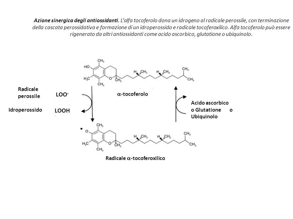 Azione sinergica degli antiossidanti