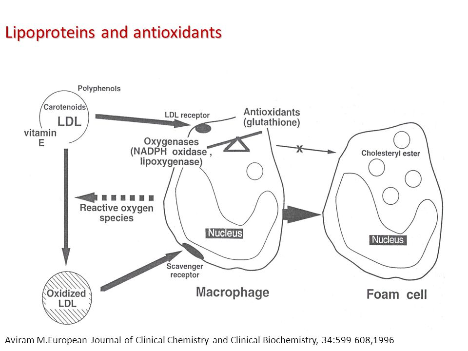 Lipoproteins and antioxidants