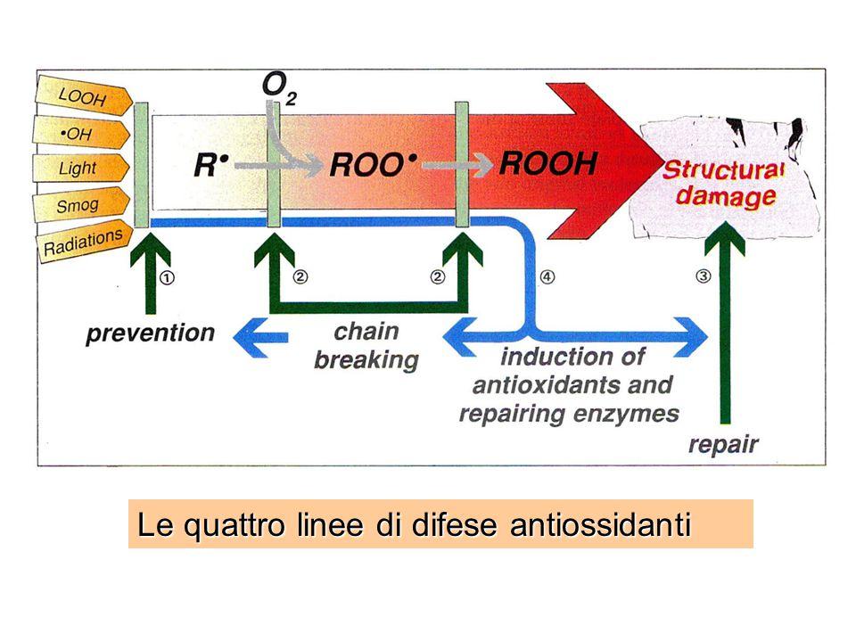 Le quattro linee di difese antiossidanti