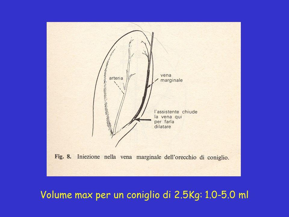 Volume max per un coniglio di 2.5Kg: 1.0-5.0 ml