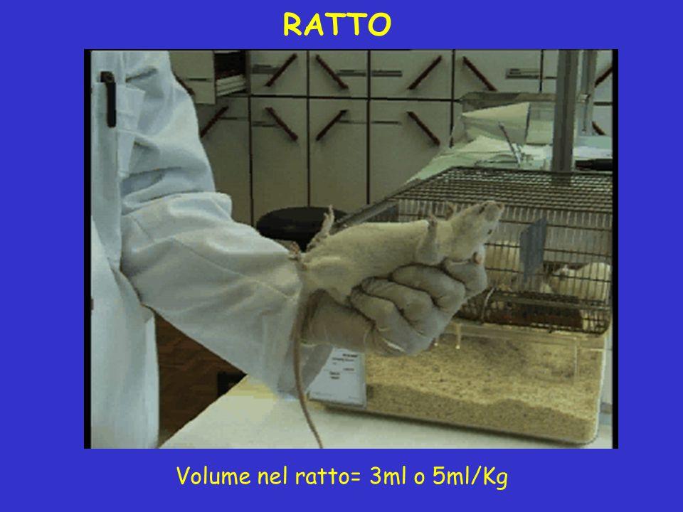 Volume nel ratto= 3ml o 5ml/Kg