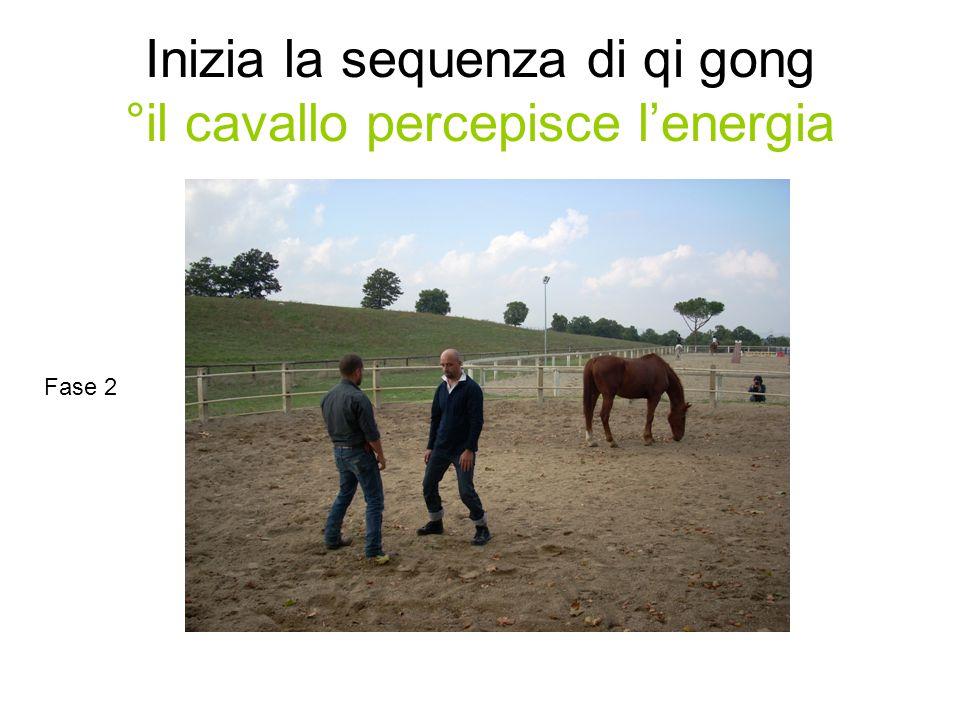 Inizia la sequenza di qi gong °il cavallo percepisce l'energia