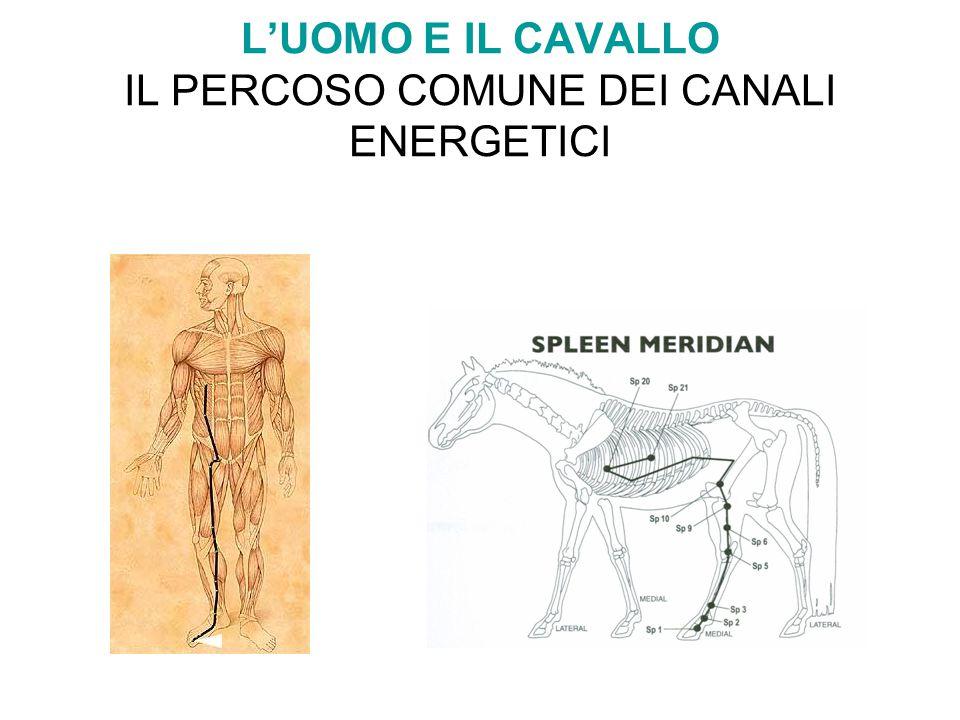 L'UOMO E IL CAVALLO IL PERCOSO COMUNE DEI CANALI ENERGETICI