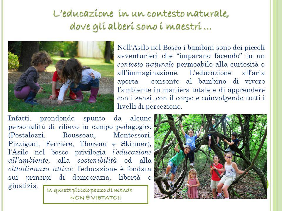 L'educazione in un contesto naturale, dove gli alberi sono i maestri …
