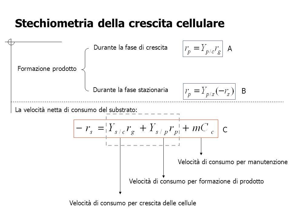 Stechiometria della crescita cellulare