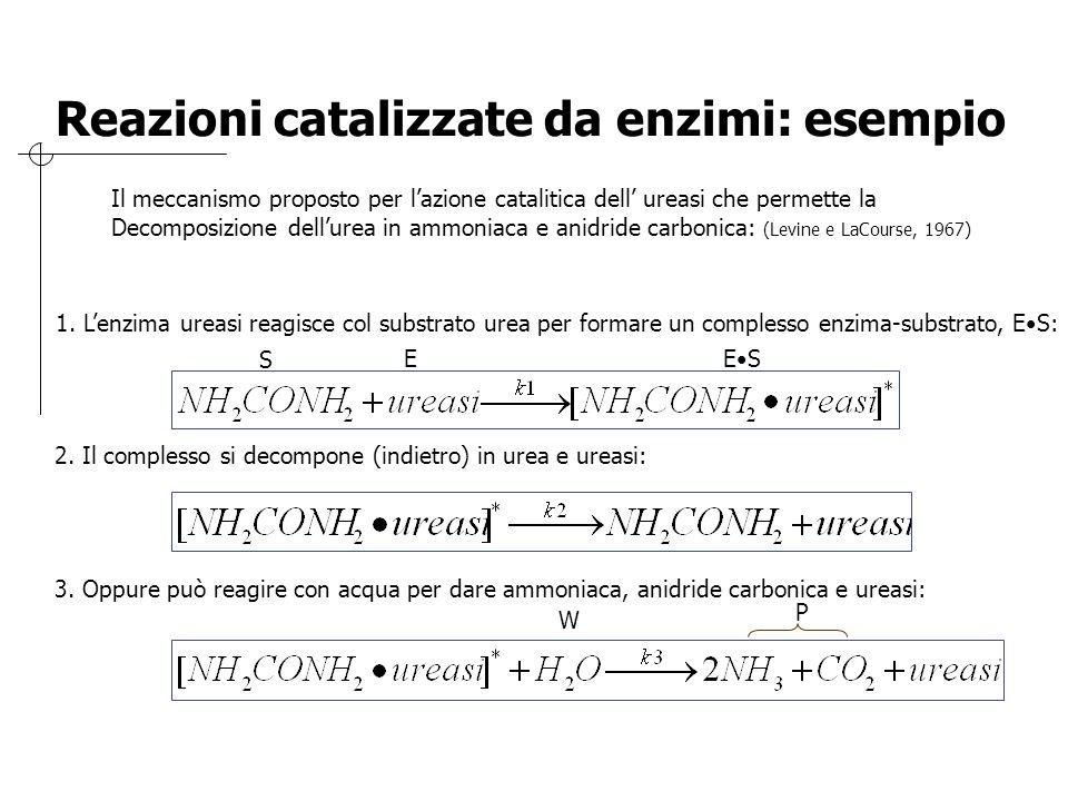 Reazioni catalizzate da enzimi: esempio