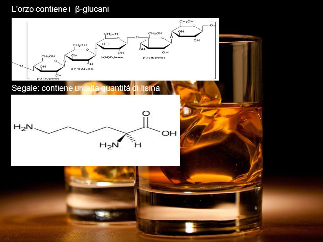 L orzo contiene i β-glucani