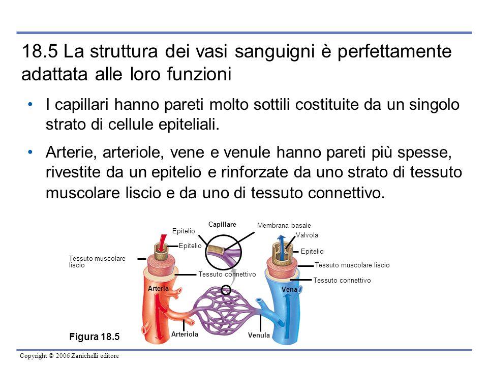 18.5 La struttura dei vasi sanguigni è perfettamente adattata alle loro funzioni