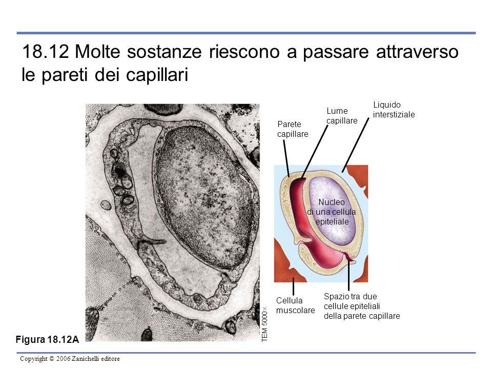 18.12 Molte sostanze riescono a passare attraverso le pareti dei capillari