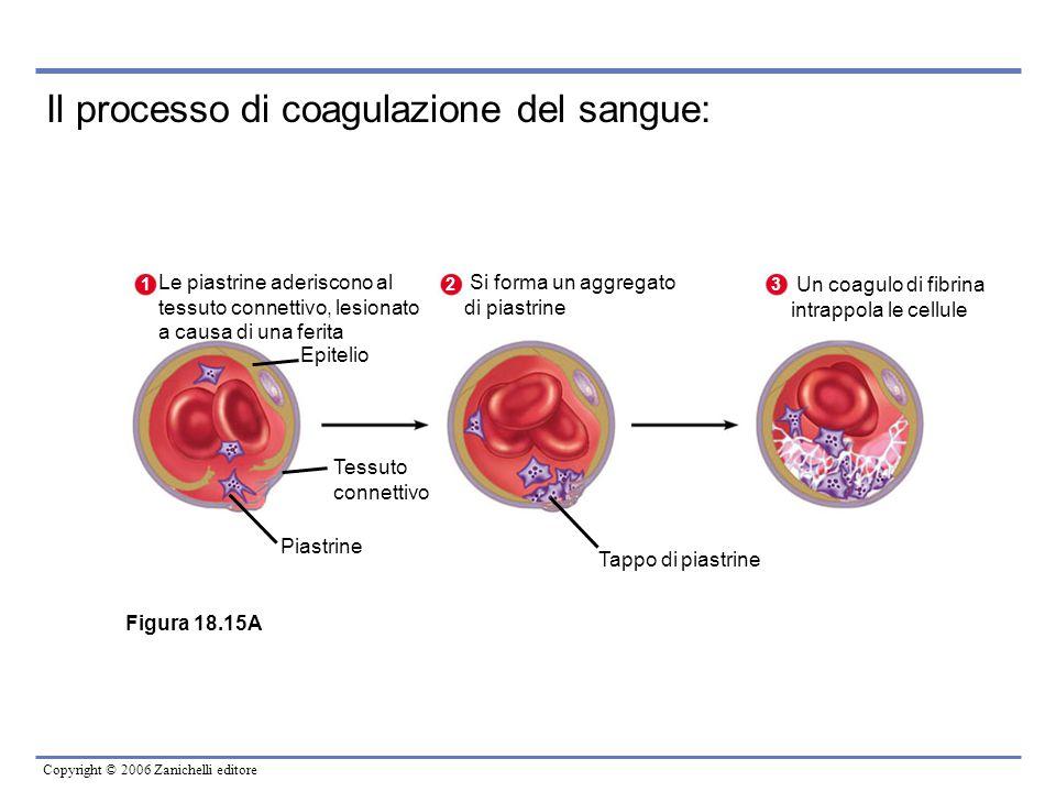 Il processo di coagulazione del sangue: