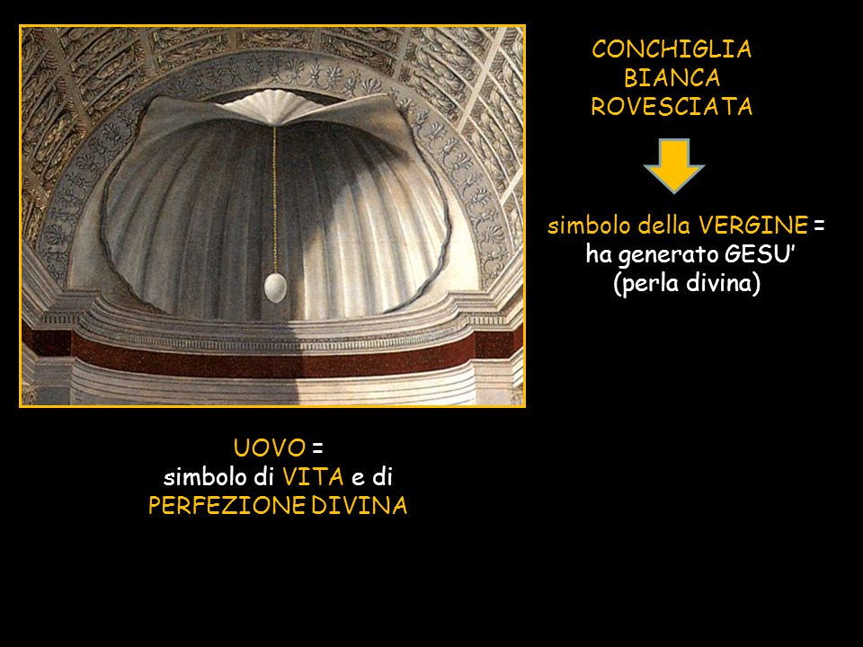 CONCHIGLIA BIANCA ROVESCIATA