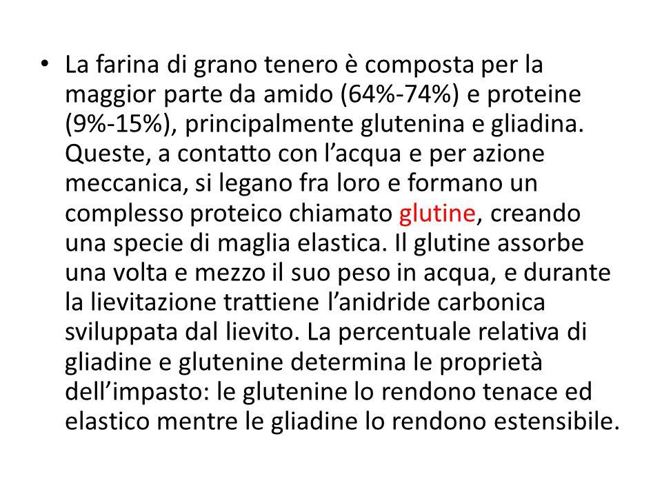 La farina di grano tenero è composta per la maggior parte da amido (64%-74%) e proteine (9%-15%), principalmente glutenina e gliadina.