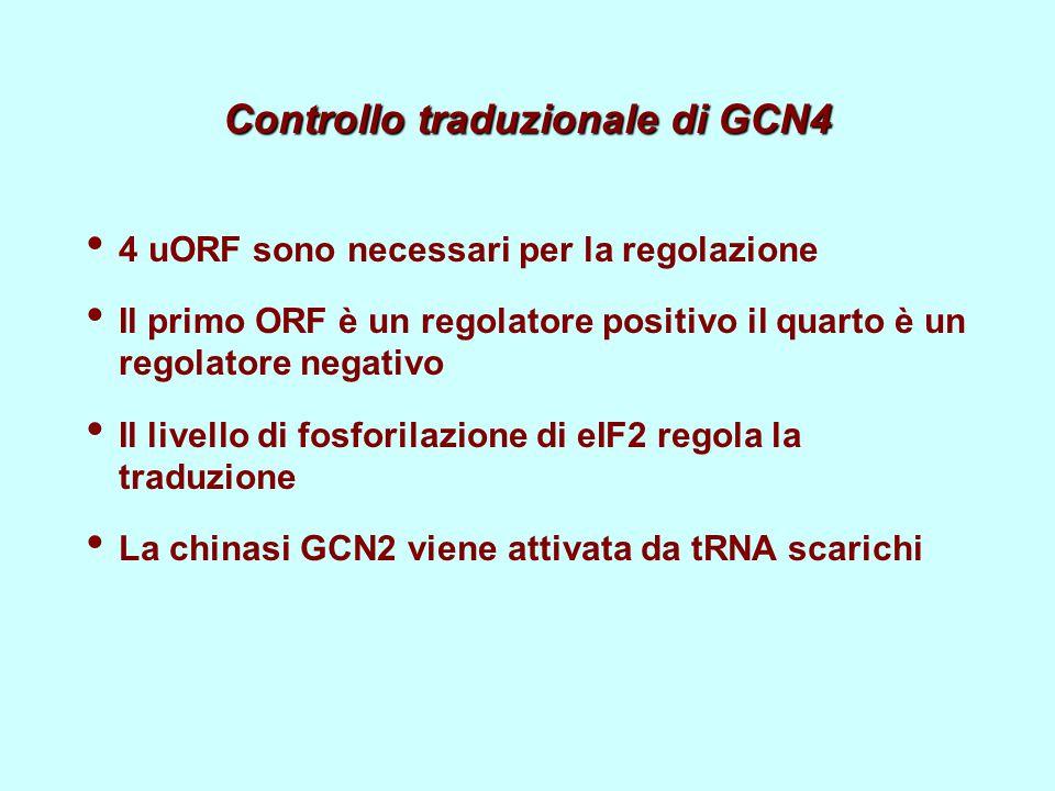 Controllo traduzionale di GCN4