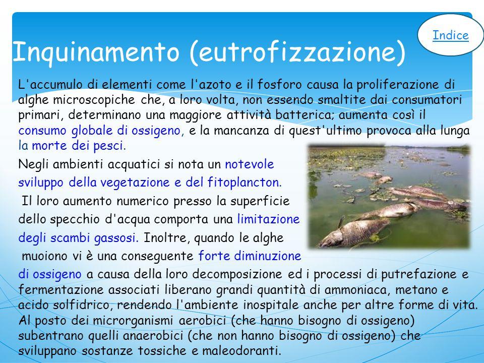 Inquinamento (eutrofizzazione)
