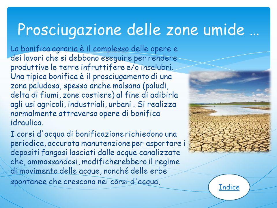 Prosciugazione delle zone umide …