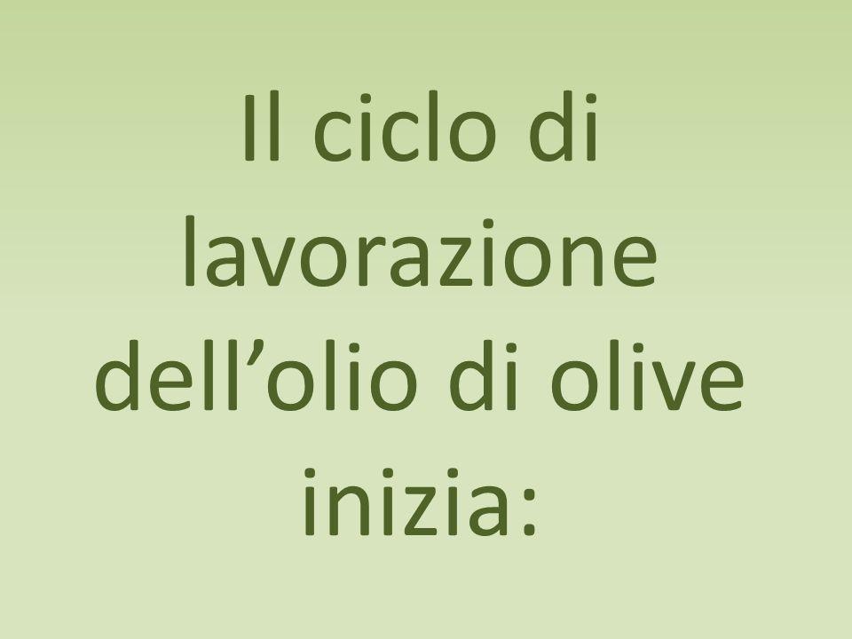 Il ciclo di lavorazione dell'olio di olive inizia: