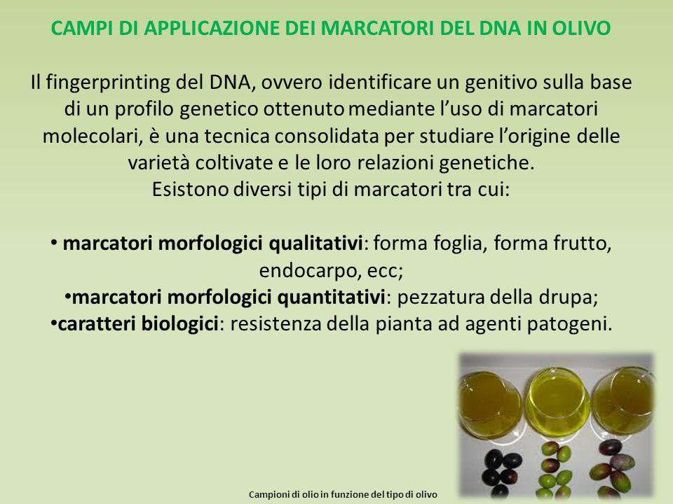 CAMPI DI APPLICAZIONE DEI MARCATORI DEL DNA IN OLIVO