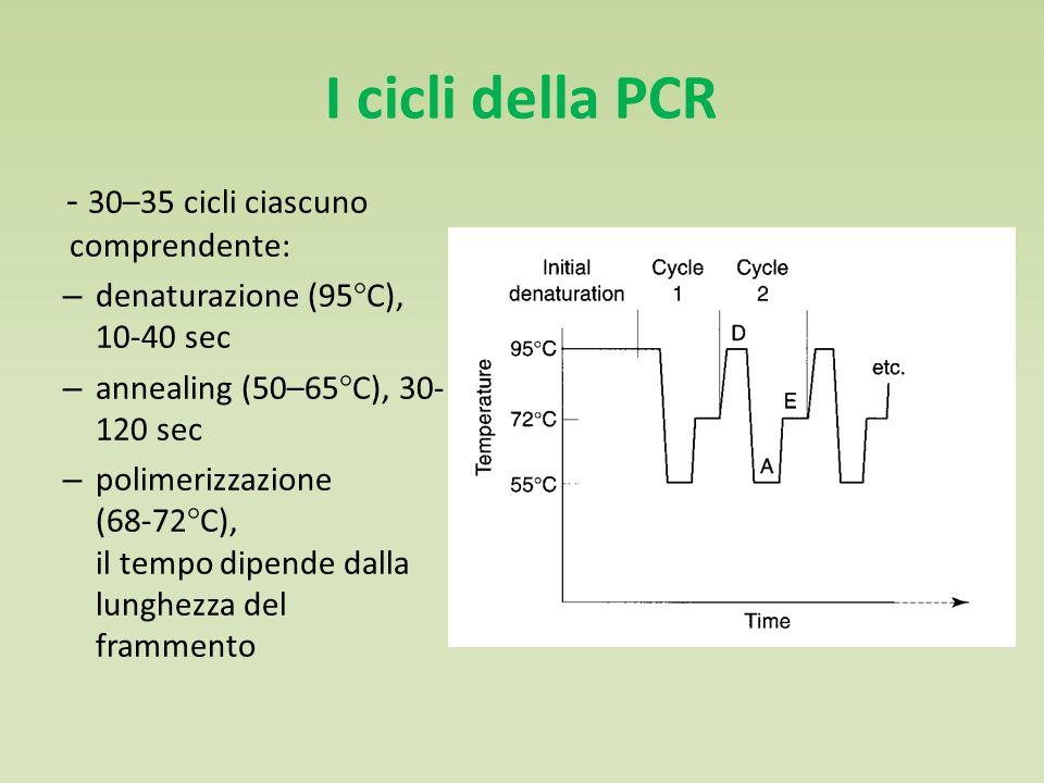 I cicli della PCR - 30–35 cicli ciascuno comprendente: