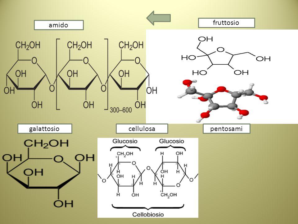 fruttosio amido galattosio cellulosa pentosami